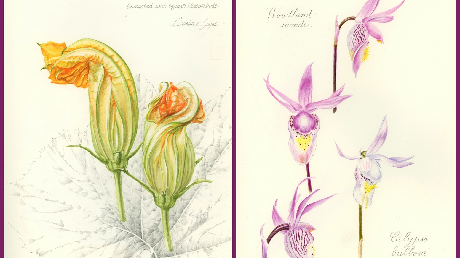 Sketchbook with 76 illustrations by students and instructors representing the incredible artistry and talent at Denver Botanic Gardens.