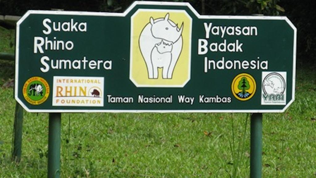 Of The Odd Toe and Horn:The Sumatran Rhino project video thumbnail