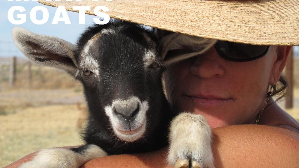 Meet Marfa Goats project video thumbnail