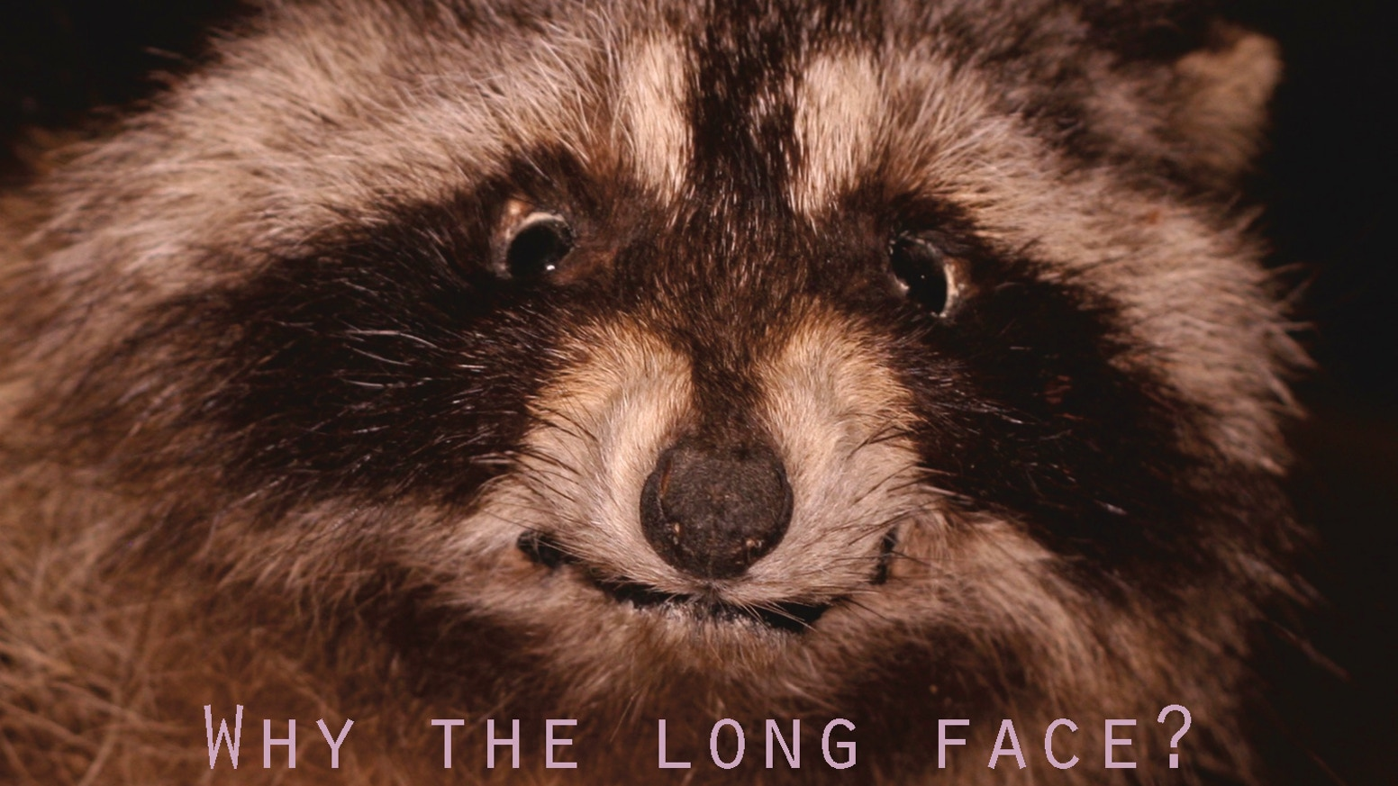 Why the long face? — the face charades game that brings taxidermy to life. Games for sale & updates at www.longfacegame.com