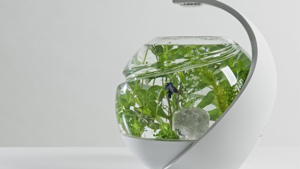 Avo: the self-cleaning tropical fish tank project video thumbnail