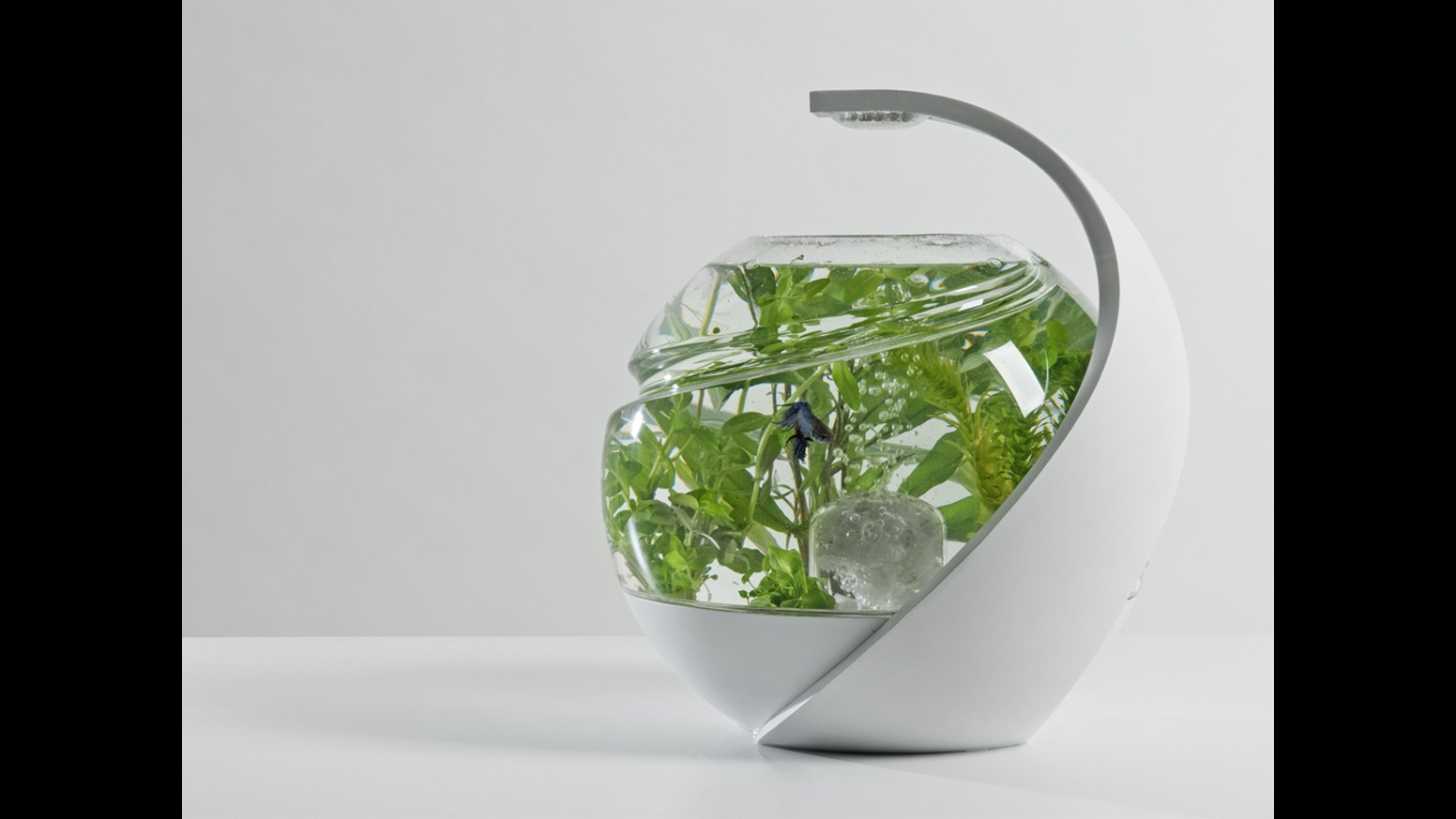Fish tank you never have to clean - Avo The Self Cleaning Tropical Fish Tank