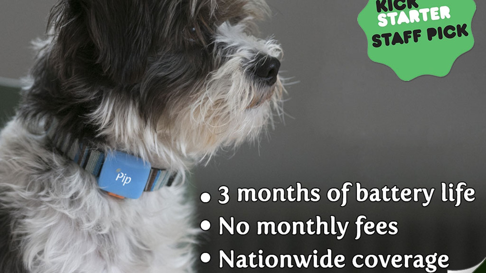 Pip is a small GPS and activity tracker for pets with great battery life, nationwide coverage and added connectivity.
