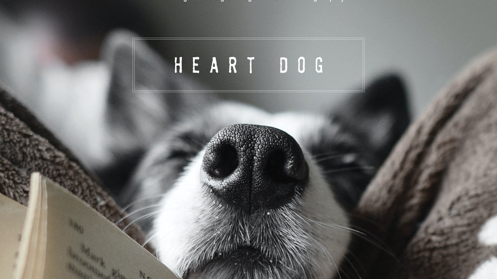 A photography book - Heart Dog project video thumbnail