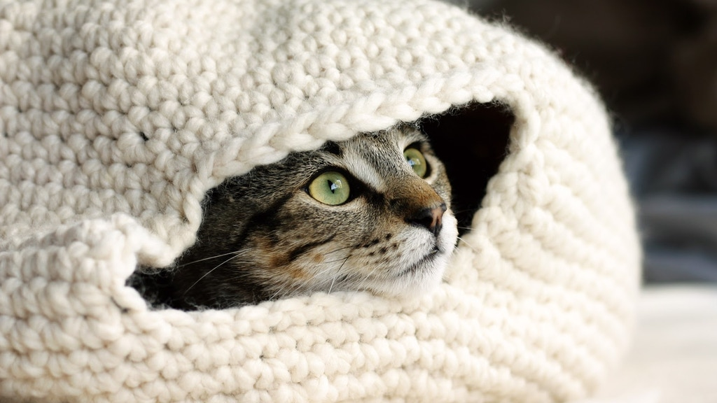 Project image for Aromatherapy cat beds