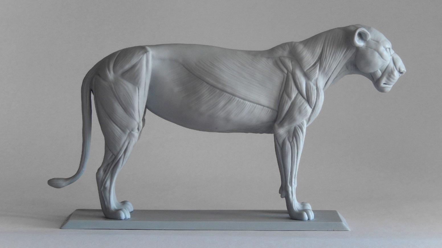 Big Cat Anatomy Sculpture - Lioness by Gabriele Pennacchioli ...