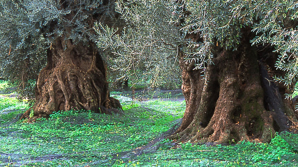 Project image for Greek Groves - A new trail in ancient Crete