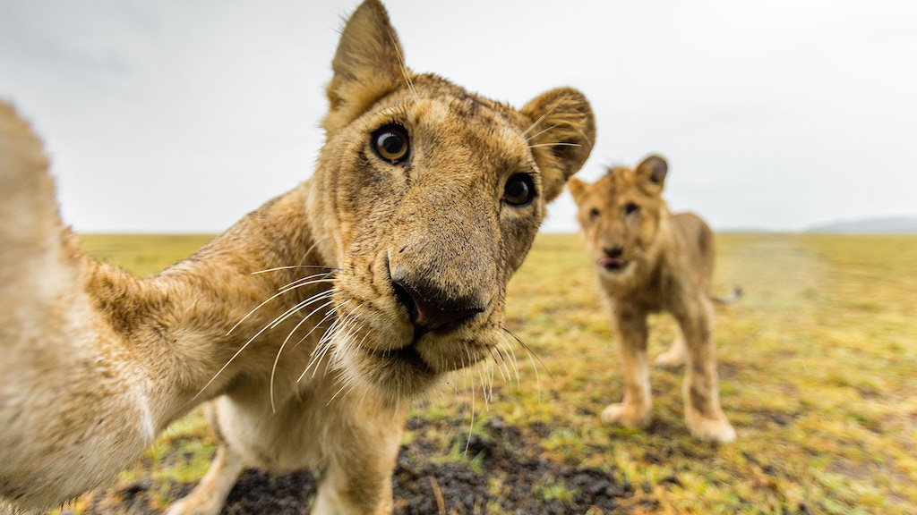 Africa on Safari - The Book project video thumbnail