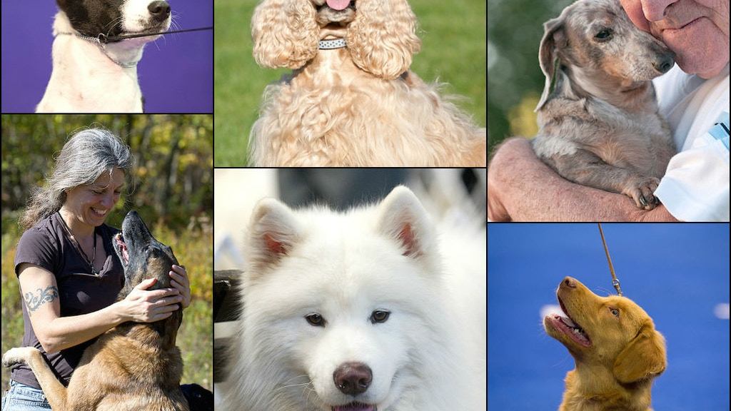 National Purebred Dog Day project video thumbnail
