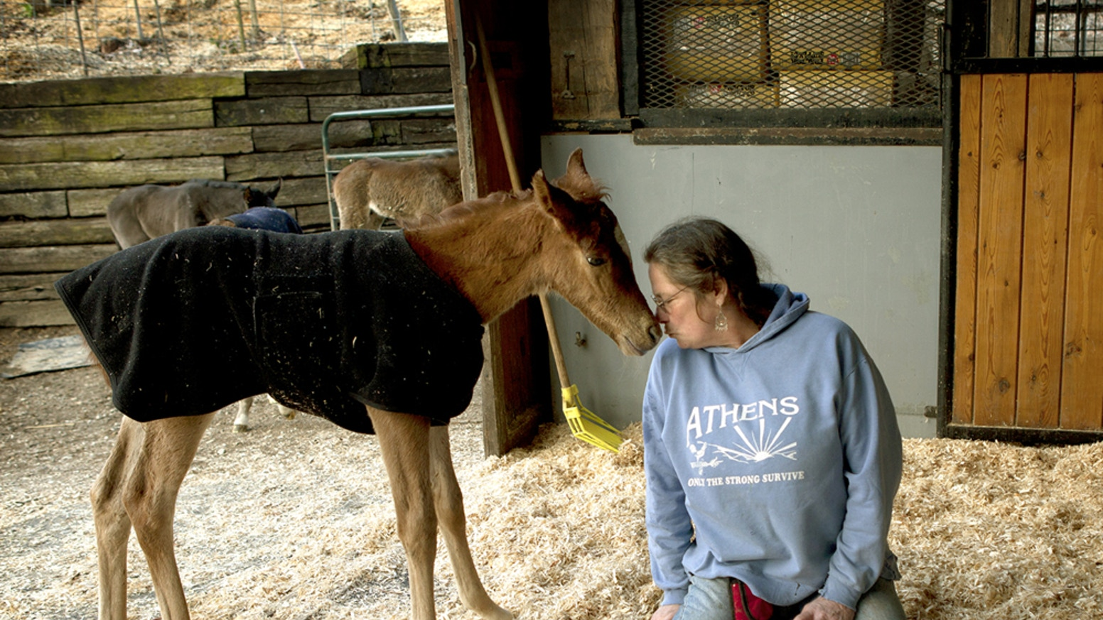 This documentary is about Last Chance Corral in Athens, Ohio and their heroic work saving nurse mare foals from imminent death.