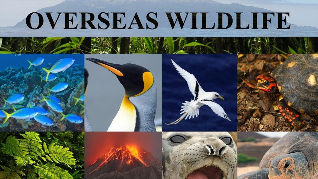 Britain's Overseas Wildlife project video thumbnail