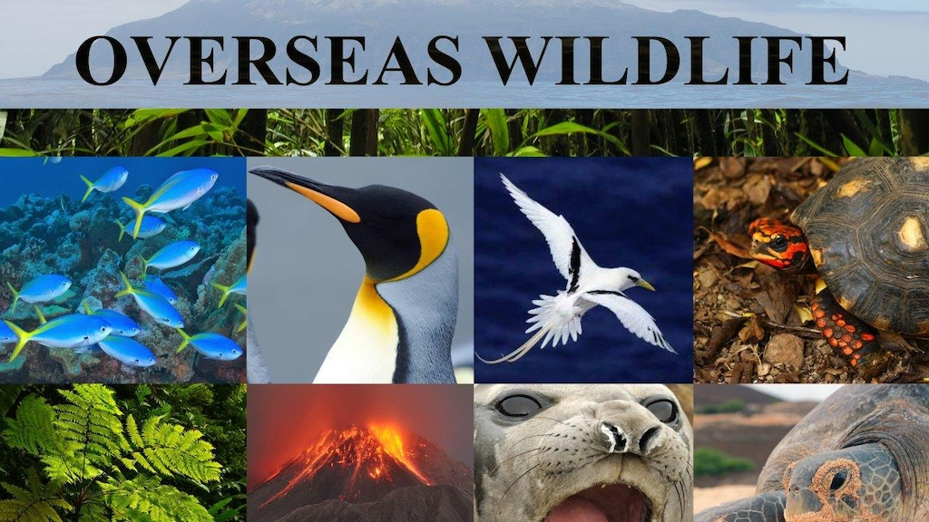 Britain's Overseas Wildlife project video thumbnail