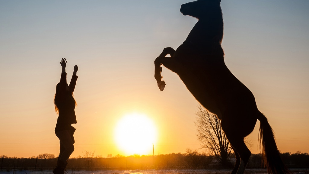 Essence: exploring the horse-human relationship project video thumbnail