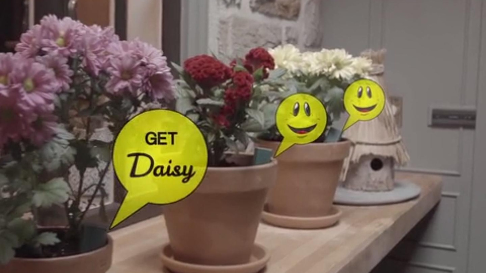 Daisy Potted Plant Soil Moisture Sensor And App By Digital Spring