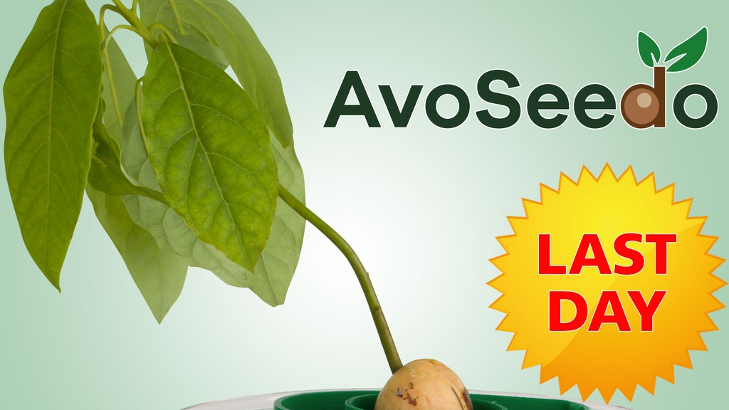 AvoSeedo - Grow your own Avocado Tree with ease! project video thumbnail