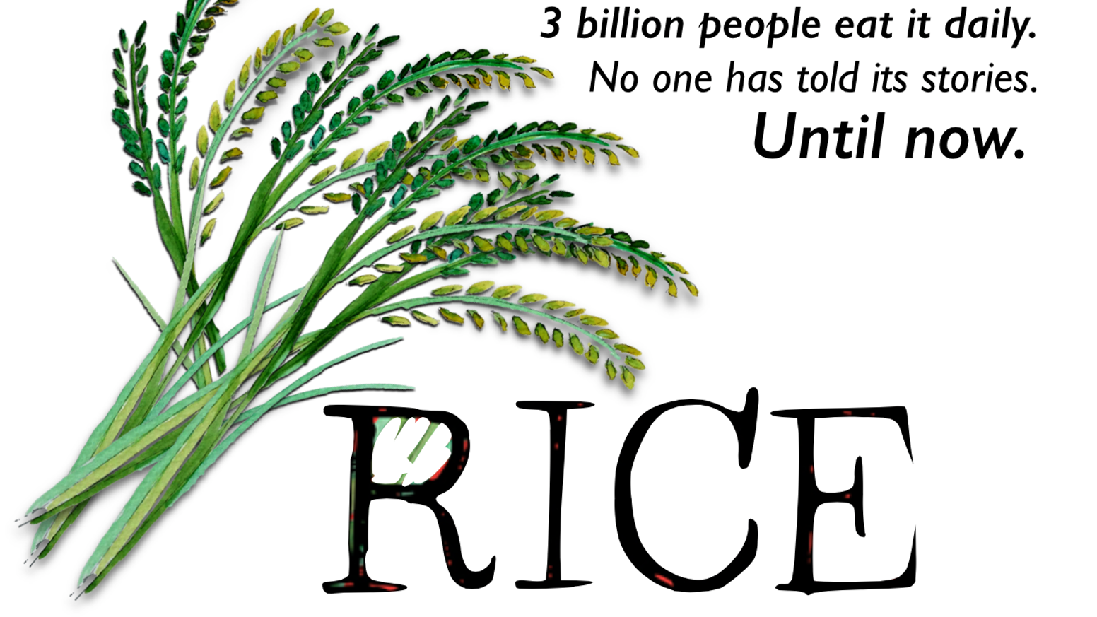 Quiet yet seething with drama... Rice is about to have its stories told. Expect gods, blood, tragedy, joy, thieves and yes, rice.