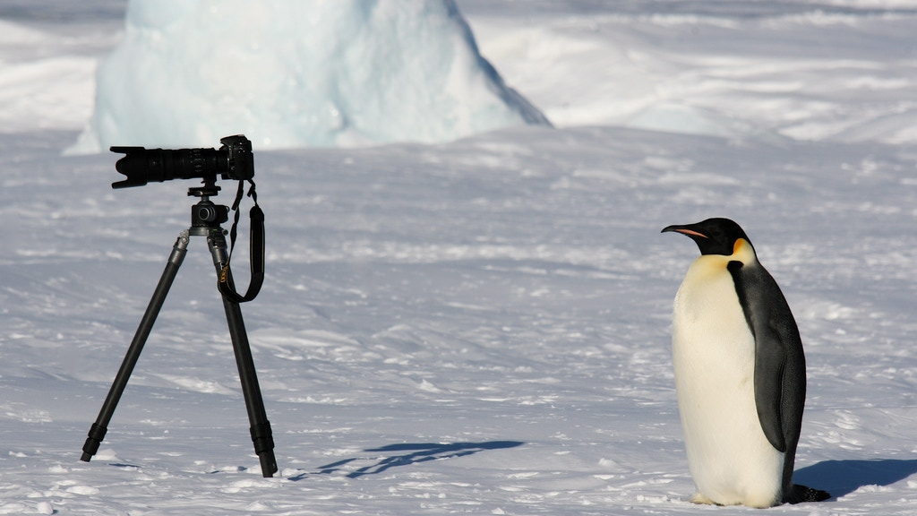 The White Desert: Wildlife & Antarctica photobook project video thumbnail