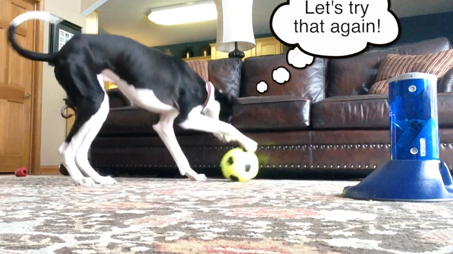 Want quiet, calm, happy dogs? It's easy with the world's first universal smart training & game system for pets.