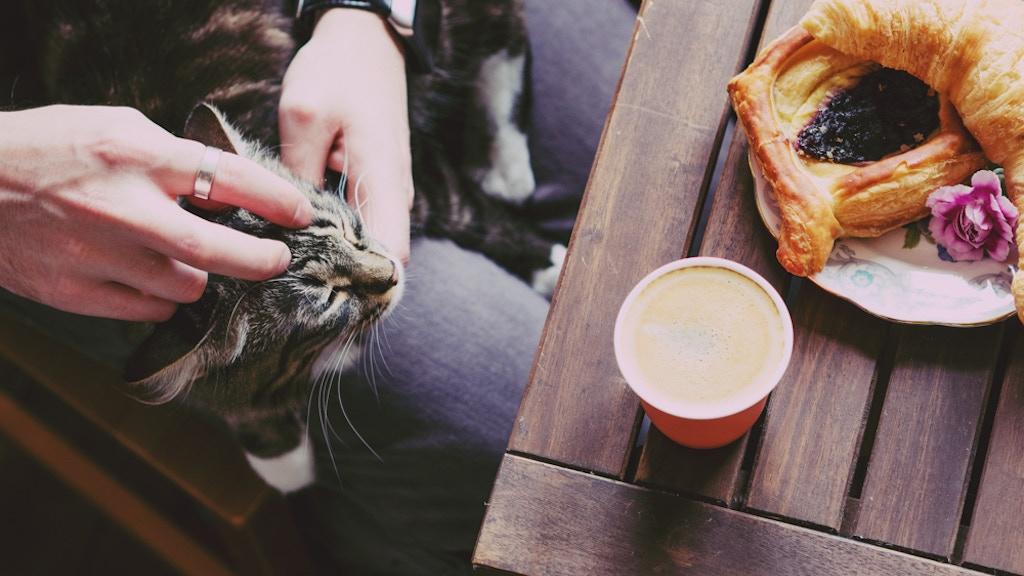 Sydney Cat Café project video thumbnail