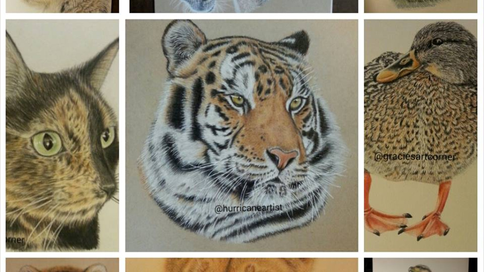 I would like to create realistic colored pencil drawings of animals and would like to have