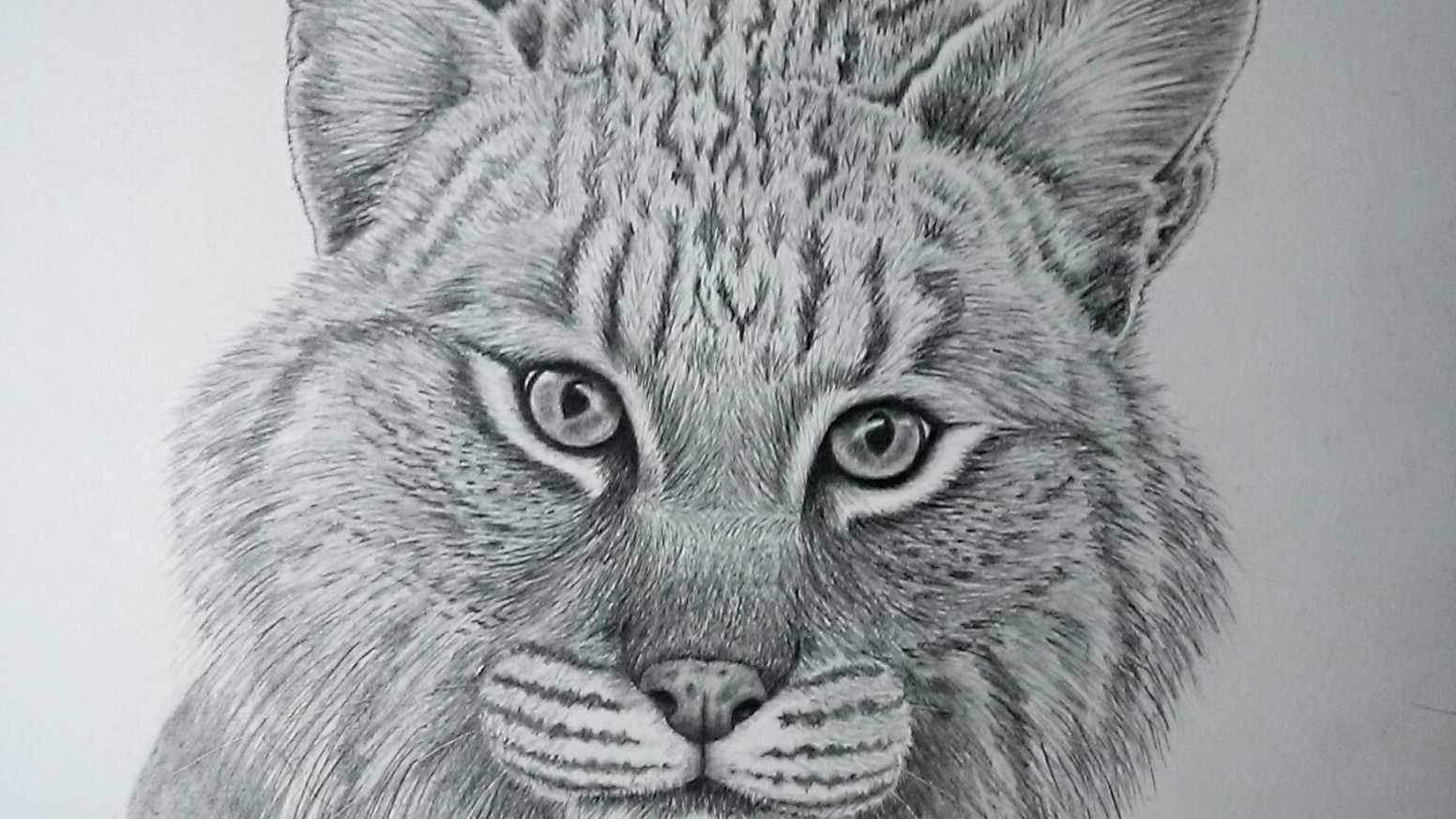 Wildlife & Nature Drawings Starting at $5! by Tammy Liu