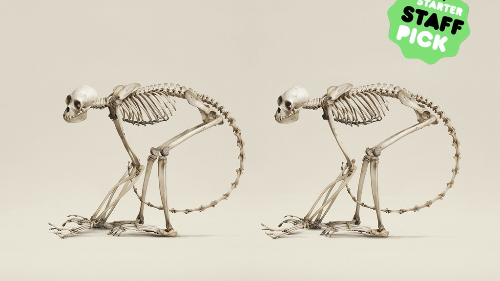 Animal Kingdom    ( Stereoscopic Images of Natural History ) project video thumbnail