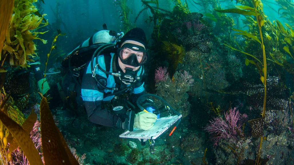 Marine Ecosystem Assessment of California's Channel Islands project video thumbnail
