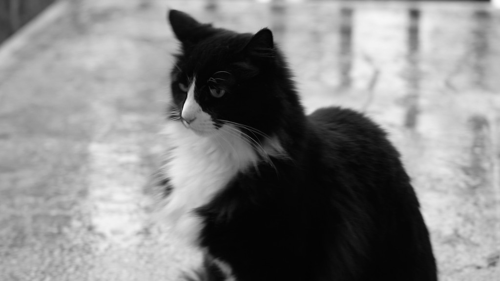 Henri, le Chat Noir's New Book - Reflections on Human Folly project video thumbnail