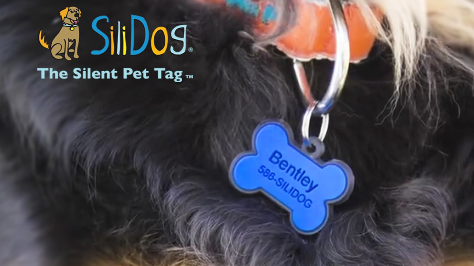 The World's Best Dog Tags - Pet ID tags that won't jingle or fade, and now glow-in-the-dark! Customize yours now! #ShareTheSili