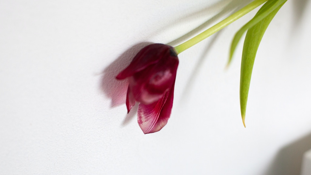 'Tulip, my mother's favourite flower' - A Photo Book. project video thumbnail