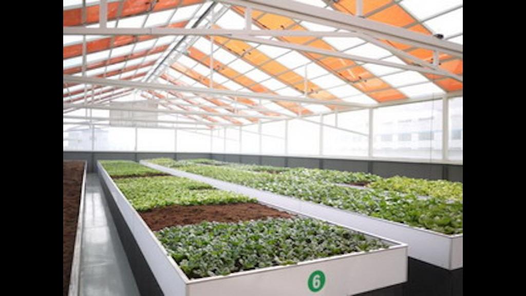 Self Sustaining Solar Greenhouse Engineering Student