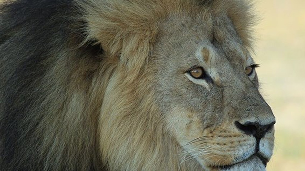 Project image for Cecil - The Life of One Extraordinary Lion