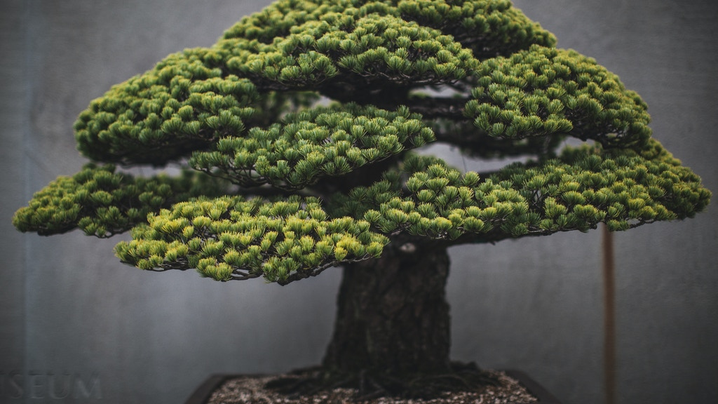 In Training: a book of Bonsai photographs project video thumbnail