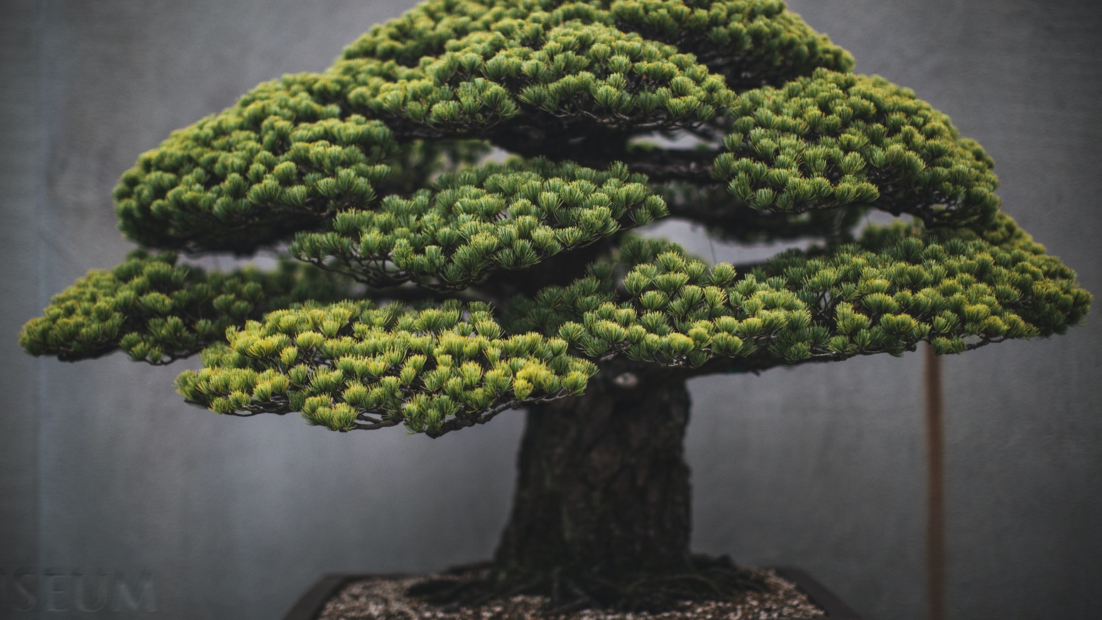 A fine art photography book taking a new look at the art of bonsai.