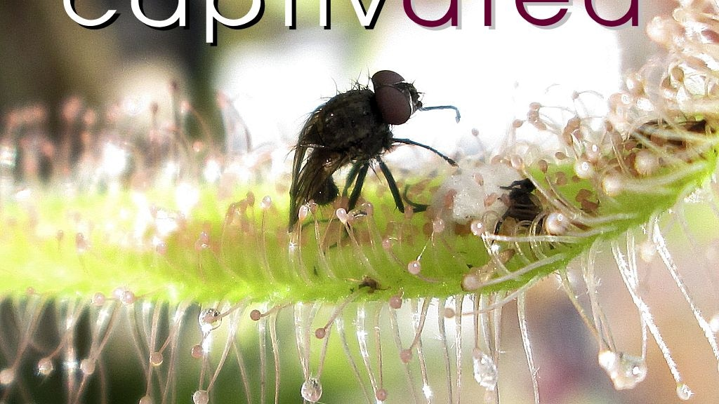 Captivated: The Allure of Carnivorous Plants project video thumbnail