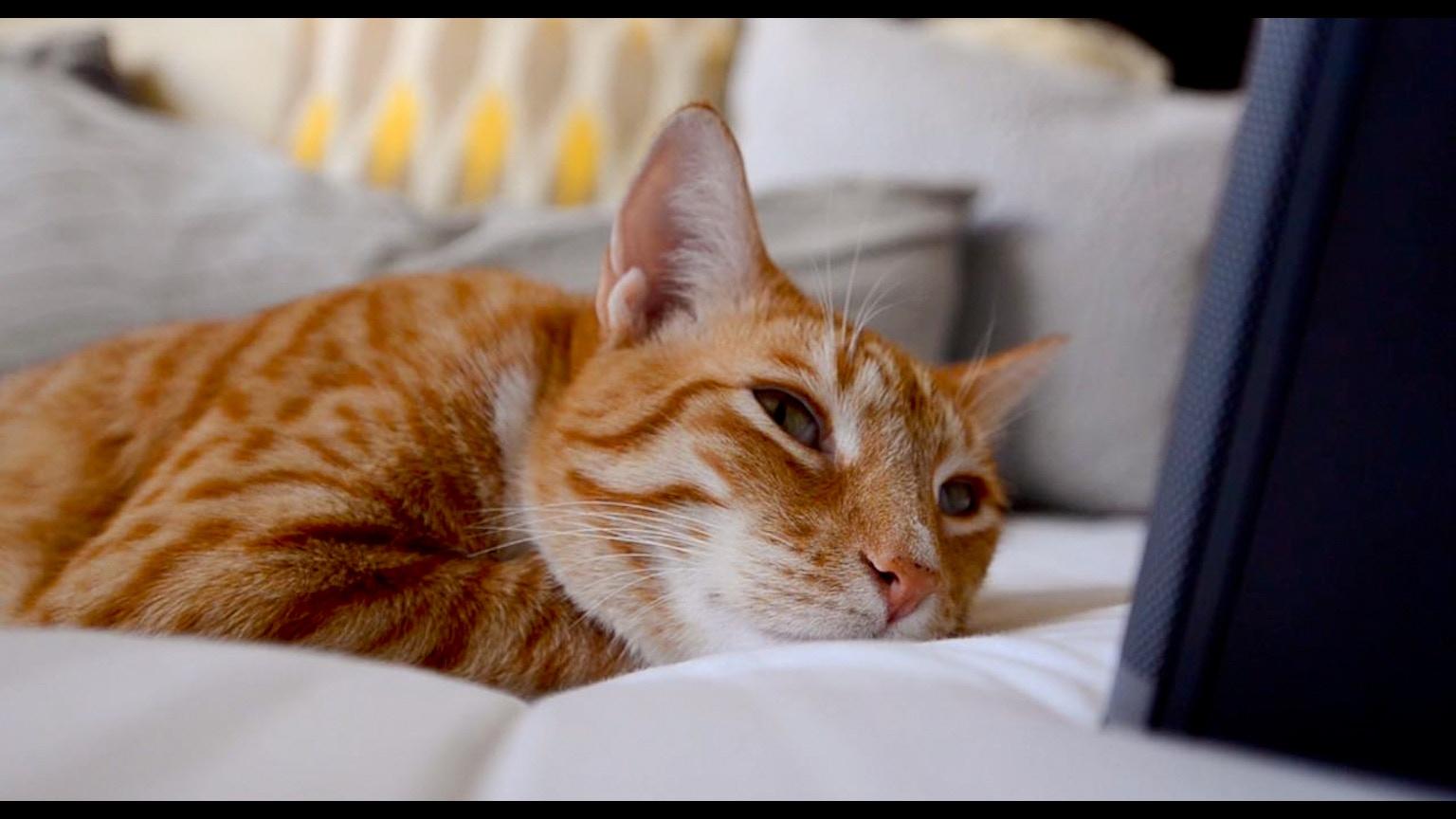 David Teie Music For Cat Youtube
