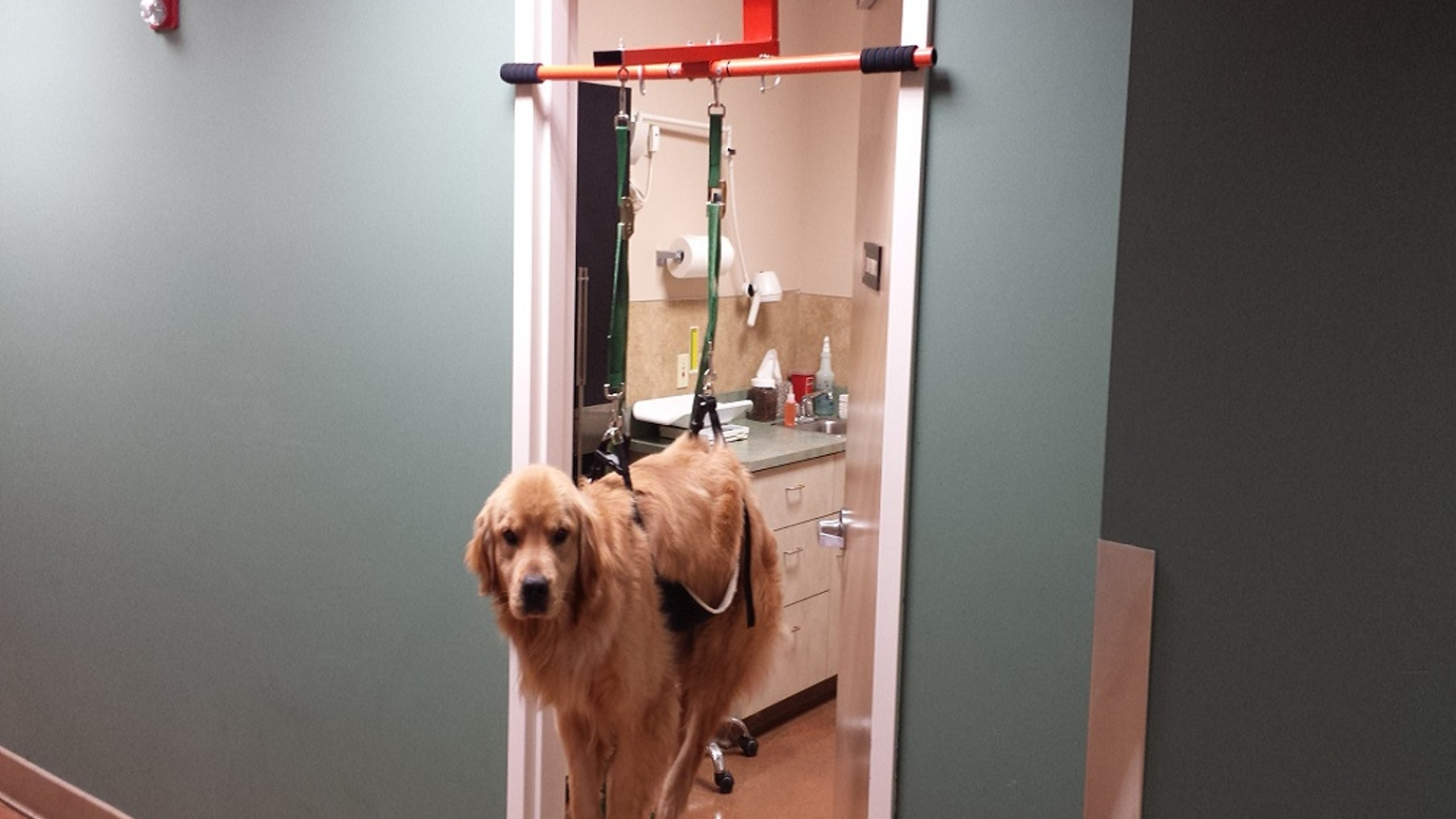 A restraining device that fits in a door frame to keep a dog immobile and cooperative during treatments.