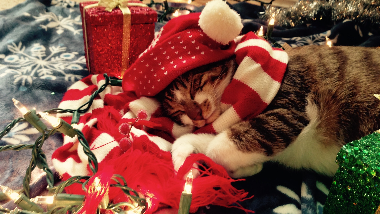 A Christmas Album for Cats, by Cats! by Marquesa the Kitten ...