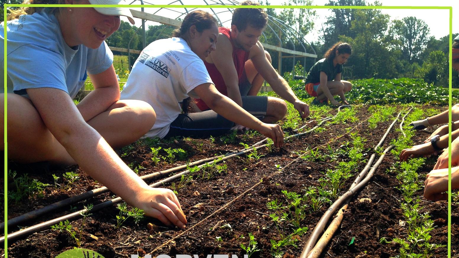 The Morven Kitchen Garden: expand, rehabilitate, transform by Emily ...