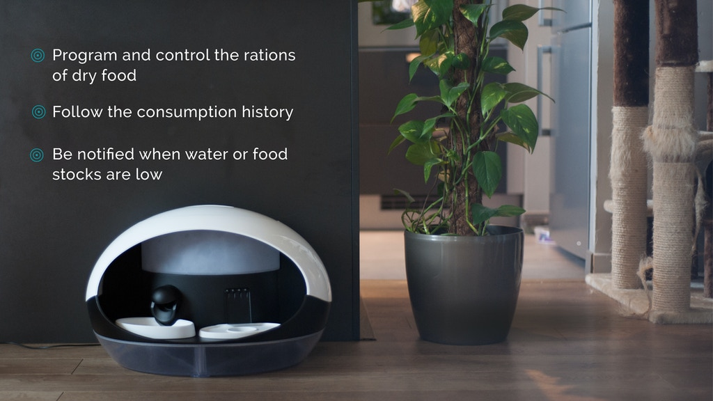 Catspad: the best smart food and water dispenser for cats project video thumbnail