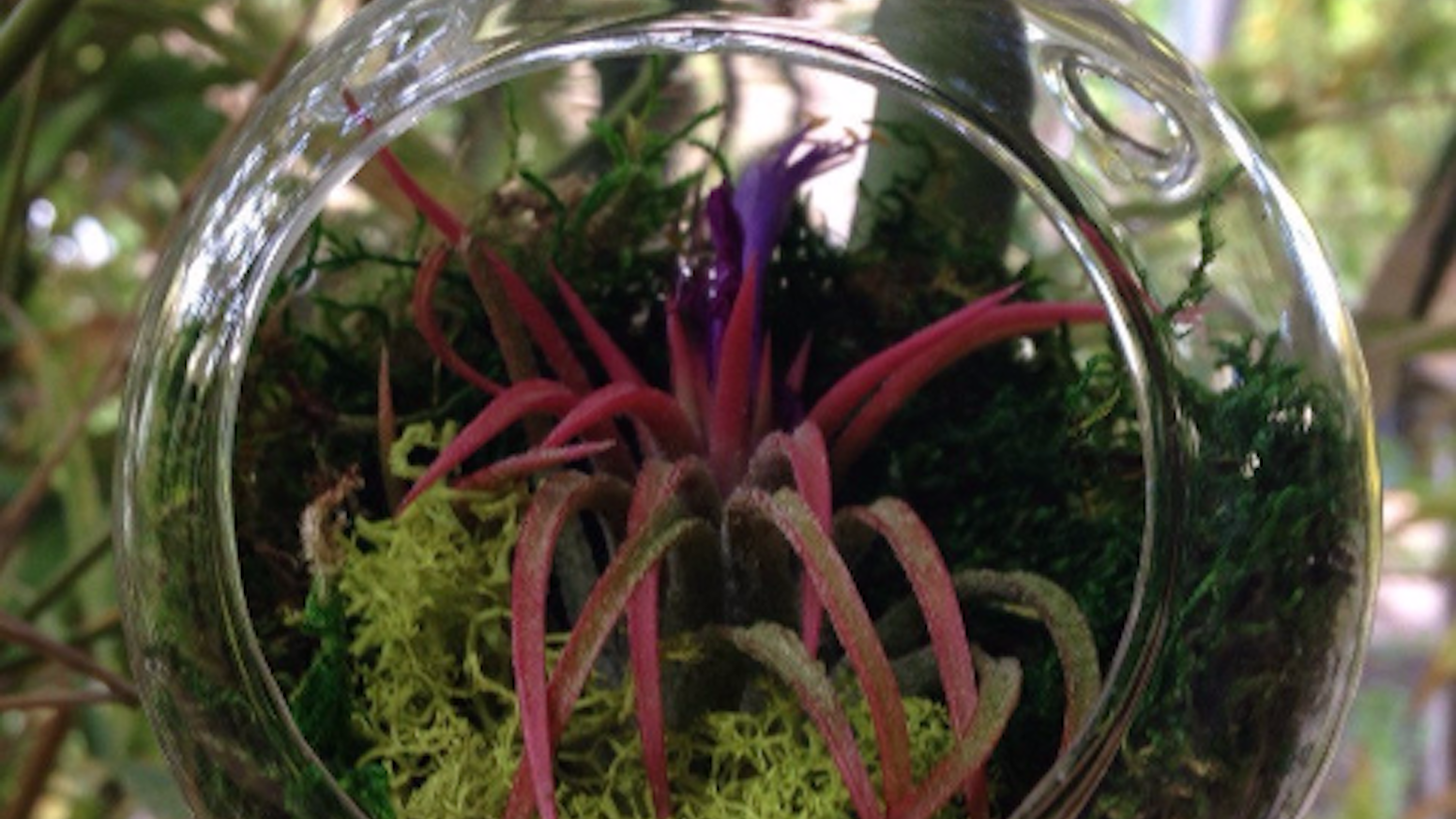 Air Plant Terrarium. A beautiful insight into another world.