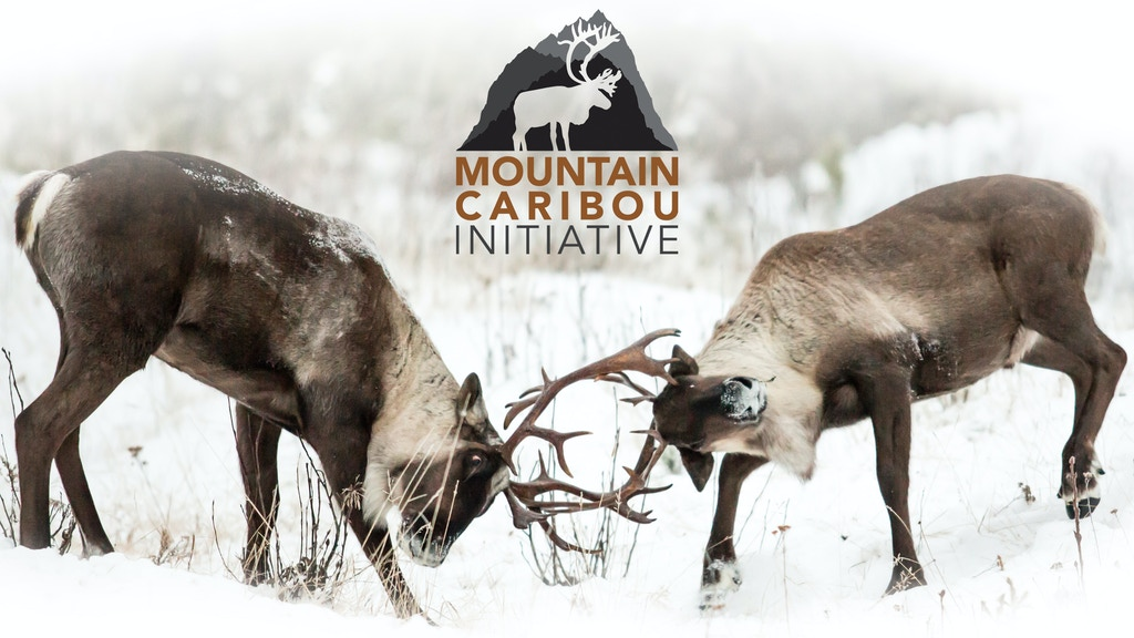 Mountain Caribou Initiative: Photo, film & Education Project project video thumbnail