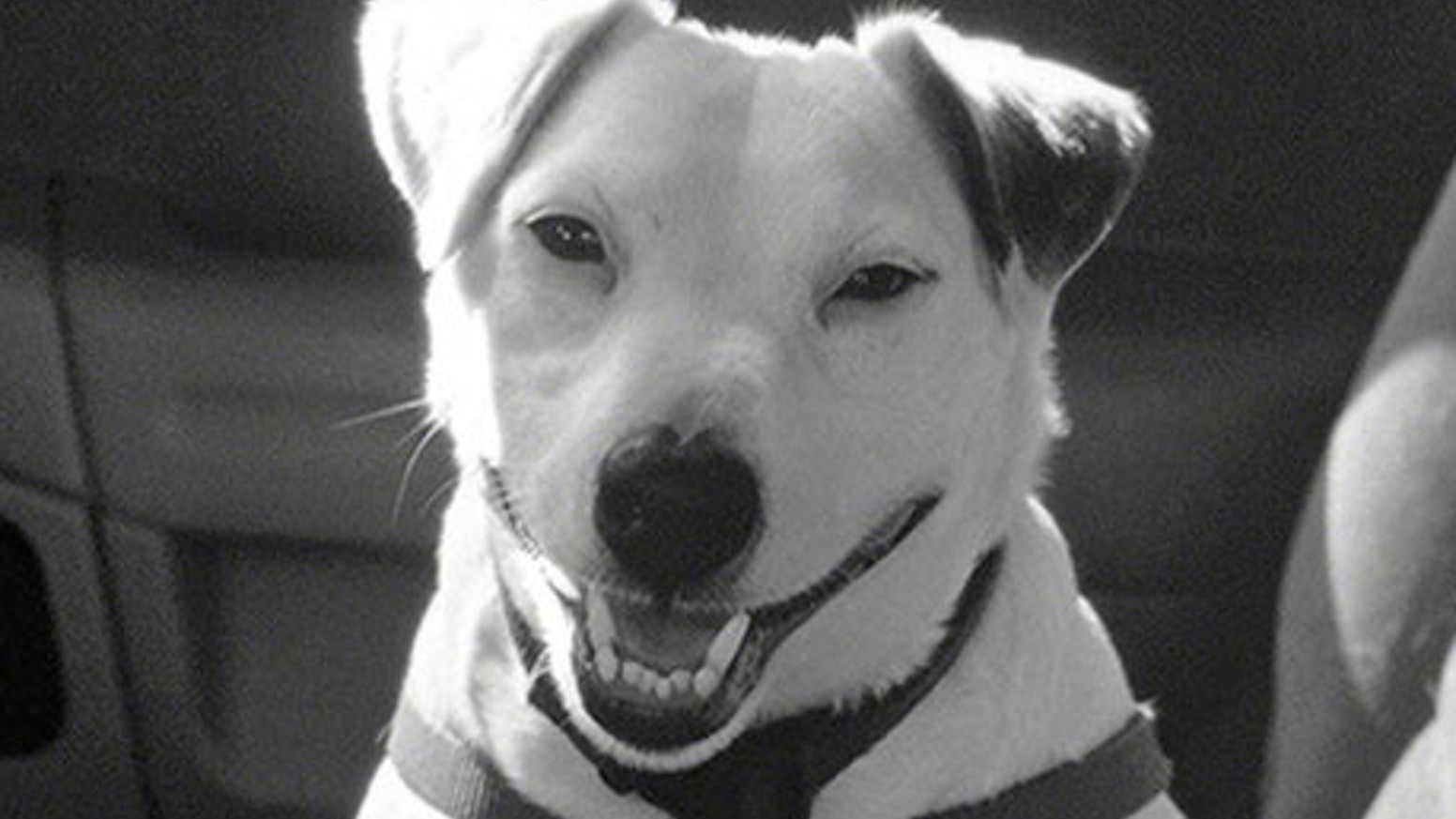 A photographer lends his voice to his dog, who recounts his narrow escape from death, then settles the question: Who rescued who? http://www.speakuptalkradio.com/bob-soltys-speaks-up/