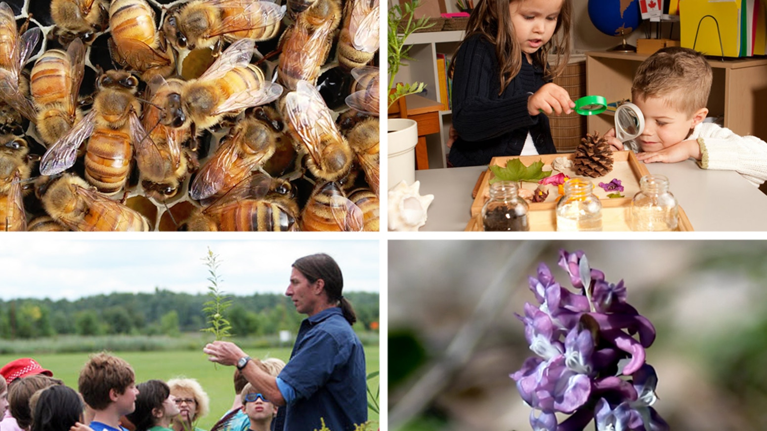 Fun and informational for all ages! Our educational programs are based on an initiative to protect and conserve honeybees!