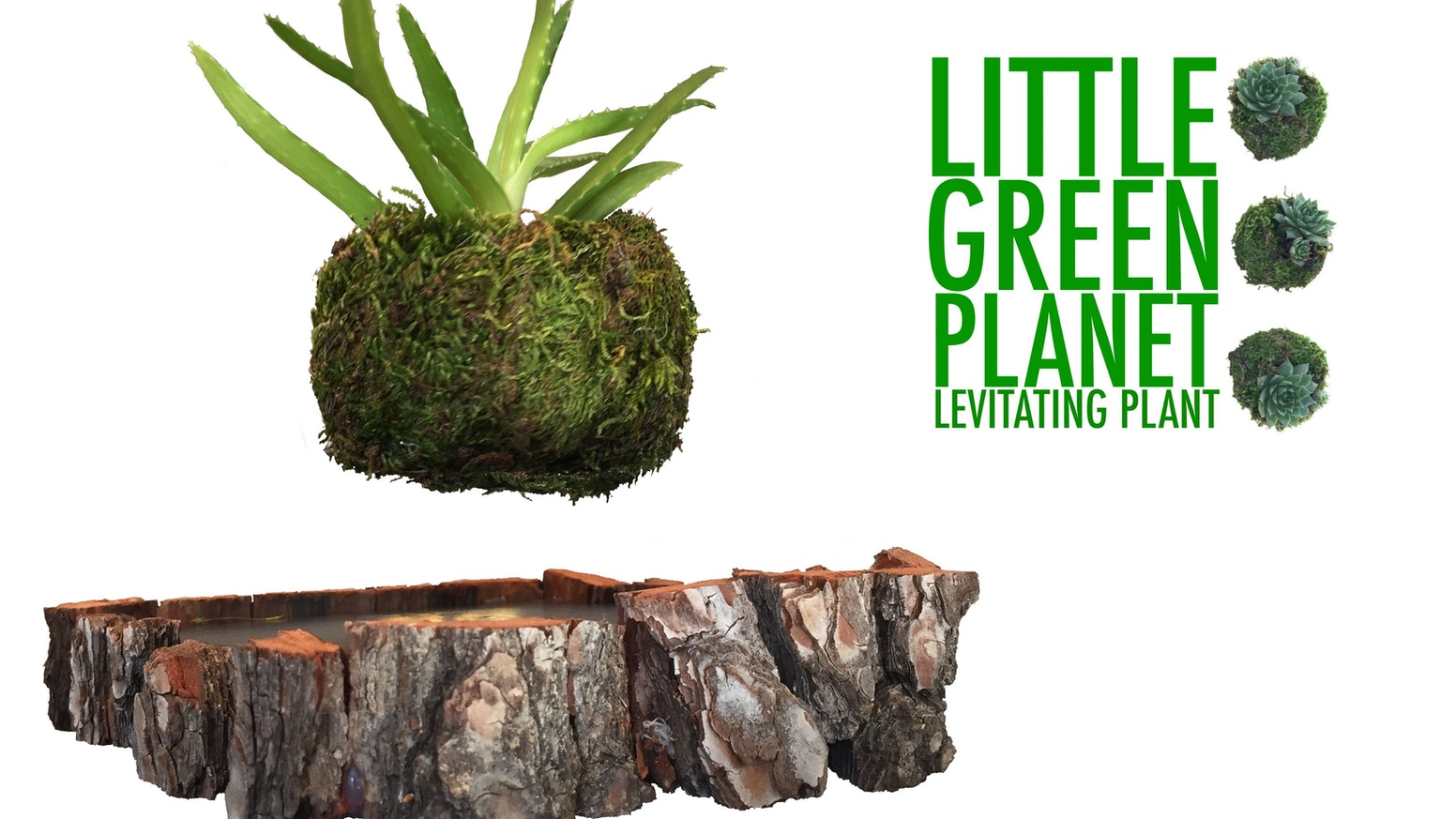 Grow your very own Little Green Plant, on a magical levitating moss planet right on your desk! Cactus? Bonsai? Bamboo? It's up to you!