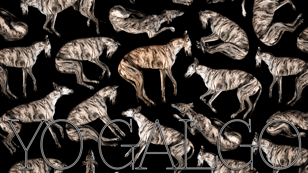 "YO GALGO ""A documentary film about the Spanish sighthound"" miniatura de video del proyecto"
