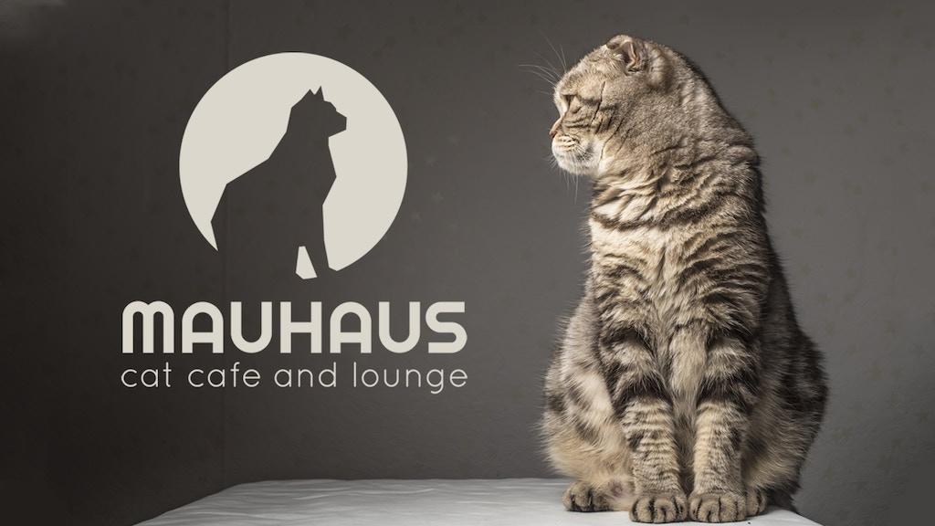 MAUHAUS Cat Cafe & Lounge project video thumbnail
