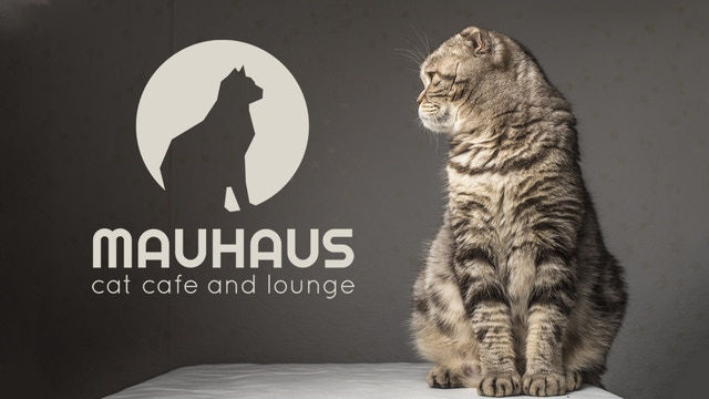 Mauhaus Cat Cafe Amp Lounge By Dana Huth Kickstarter