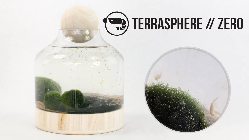 Terrasphere Zero Self Sustaining Terrariums By Mike Stone Jawn