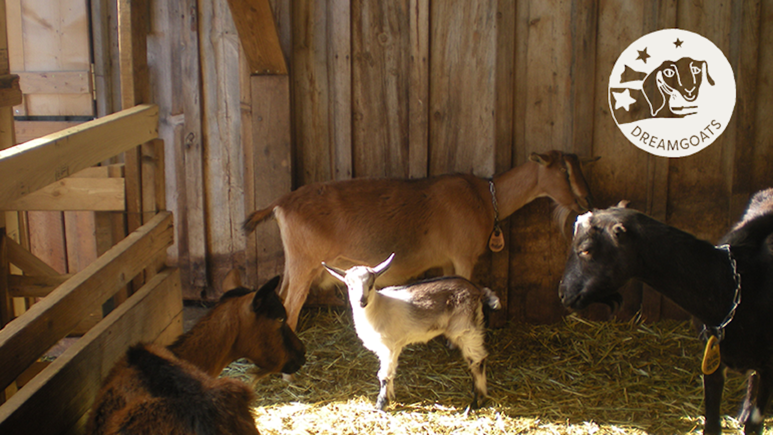 Help raise a herd of organic dairy goats & plant the seeds of a bigger dream!